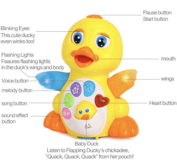 educational duck toy features and functions
